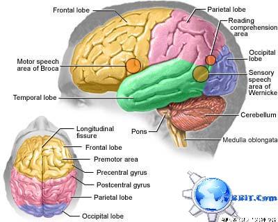 www.BBiT.com/Brain